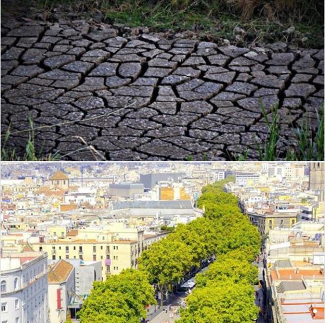 La canicule accentue la sécheresse. Face au réchauffement climatique, planter plus d'arbres est une piste, mais pas que...