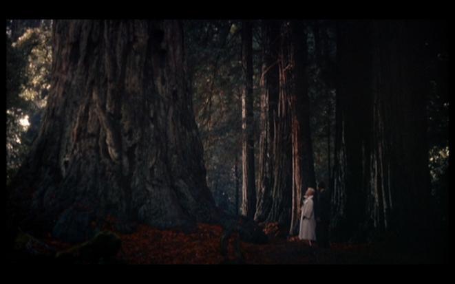 Sueurs froides, A. Hitchcock: Madeleine à Muir Woods