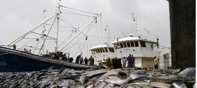 Abidjan, 27 décembre 2007. Des poissons saisis à bord de deux bateaux chinois. © Kambou Sia/AFP