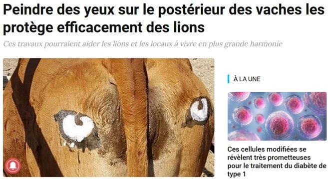 les-vaches-peuvent-etre-sauvees-par-des-yeux