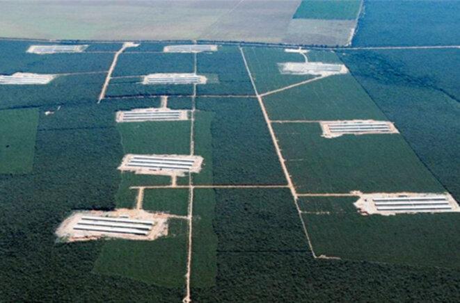 Hangars de l'entreprise d'élevage avicole Granja Faria © Granja Faria