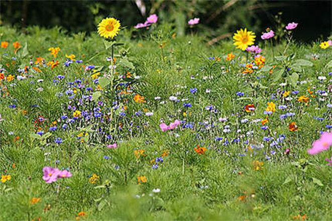 champ-de-fleurs