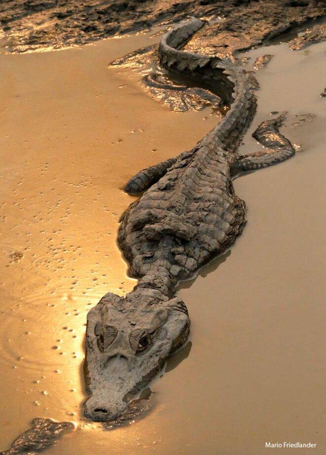 Photo du photographe et documentariste Mario Friedlander, prise sur la Transpantaneira (Pantanal, Mato Grosso), août 2020. L'auteur a autorisé la reproduction de l'image pour cet article.