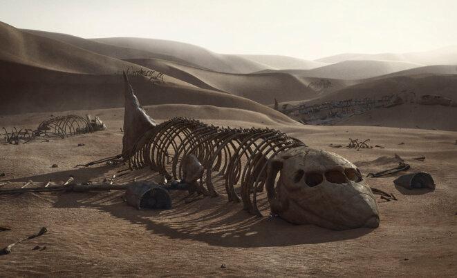 Fossile daté du XXIème siècle © SpArtS Gallery