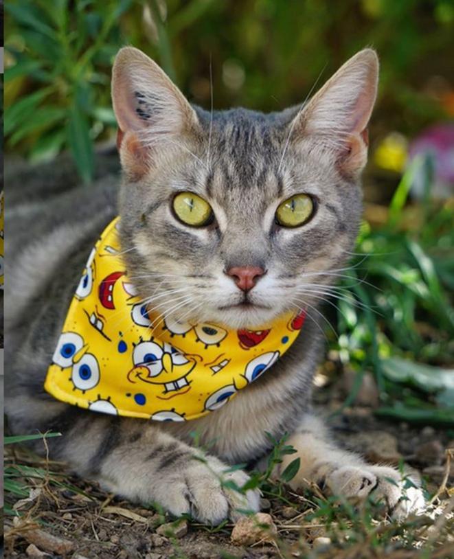 Diego Del Fuego, my special needs little cat © Luna TMG Flickr
