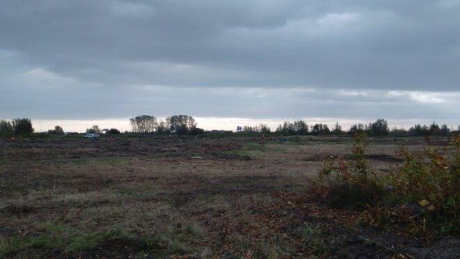 destruction-arbres-calais