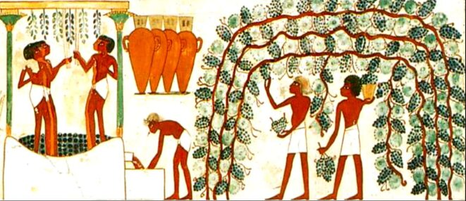 egypte-recolte-raisins-tombe-nakht-louxor