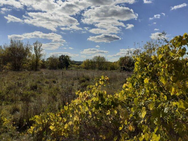 Tout autour de la MÉR, des paysages de garrigues portant une biodiversité rare et endémique