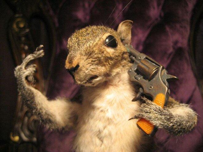 squirrel-suicide
