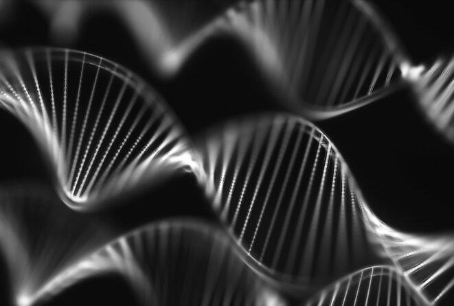 Un groupe d'hélices d'ADN est visible en noir © ktsimage / iStock