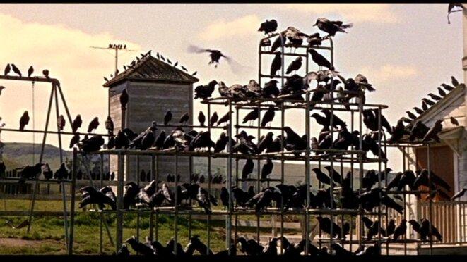 Les oiseaux, A. Hitchcock, 1963