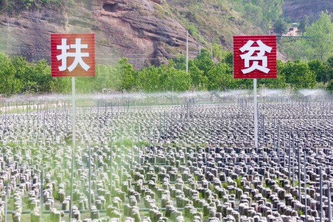Sur un panneau dans une champignonnière de la province du Shaanxi, le 16 avril 2020 : «Aider les pauvres». © Tian Donghai/Imaginechina/AFP