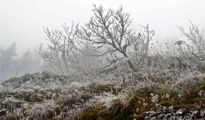 Un penchant pour l'hiver © Patrice Morel (décembre 2020)