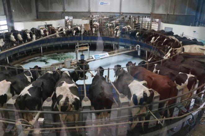 Ferme des mille vaches © Ferme des mille vaches