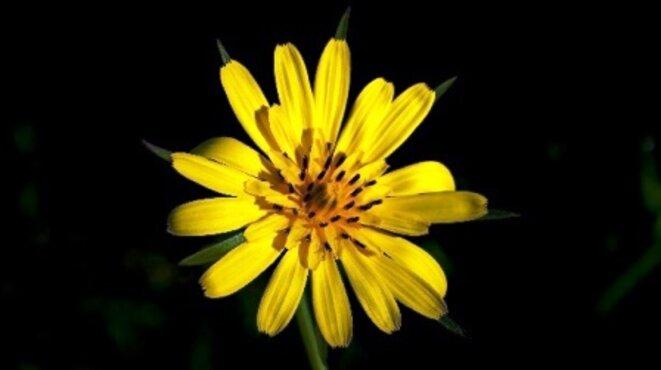 blz-fleur