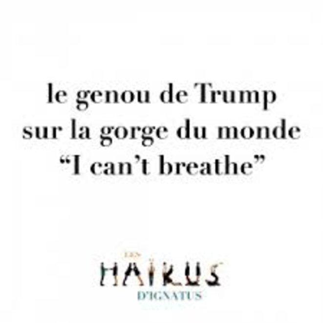 haiku-trump