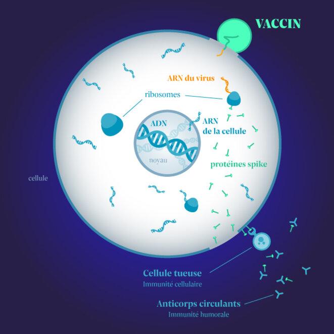 Mode d'action des vaccins ARN. © Infographie: Julien Tredan-Turini