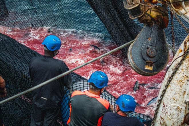 © Youenn Kerdavid / Sea Shepherd Global