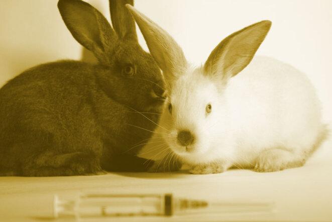 2-lapins-seringue03