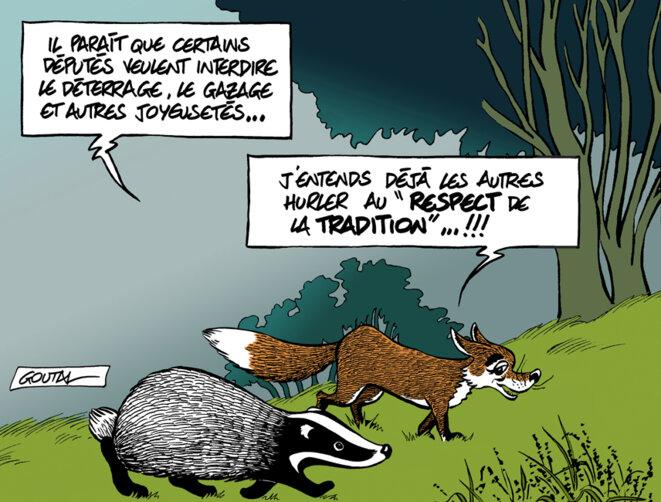 1-blaireau-renard-nature-ds