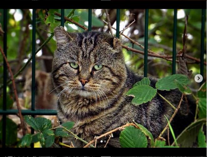 Tom Cat © Luna TMG Instagram