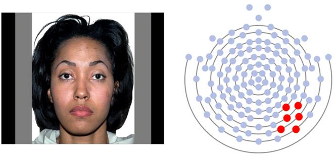 Stimulants faciaux affichant des émotions neutres et sites d'enregistrement d'électrodes EEG. Une réponse du cerveau qui indique que la reconnaissance faciale est retardée lorsque les personnes autistes sont amenées à regarder le nez, les yeux ou la bouche. © Spectrum News