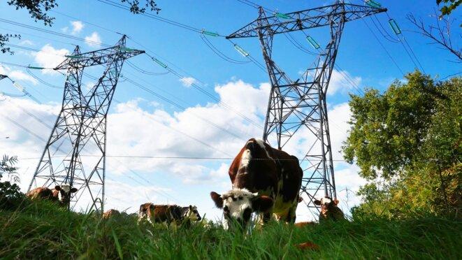 Dans la Manche, lors de sa mise en service en 1985, la ligne Menuel-Domloup aurait perturbé six élevages à proximité. © M.L.C. / Mediapart