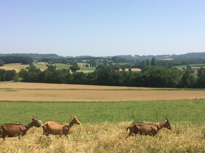 Ferme en agriculture biologique dans le Lot-et-Garonne. © Aude Vidal (CC BY-NC-SA 2.0)