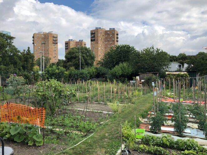 Parcelles maraîchères du jardins des Vertus, en juin 2020 (JL).