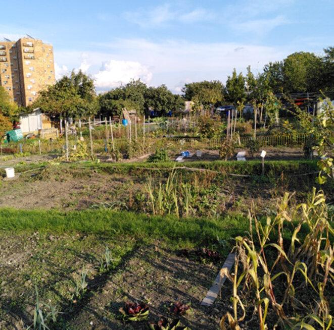 jardins-1