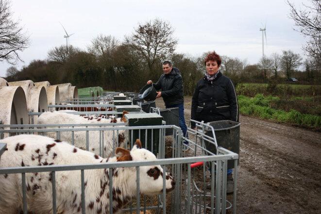 L'élevage du couple Potiron se situe non loin des éoliennes. © Manon Le Charpentier