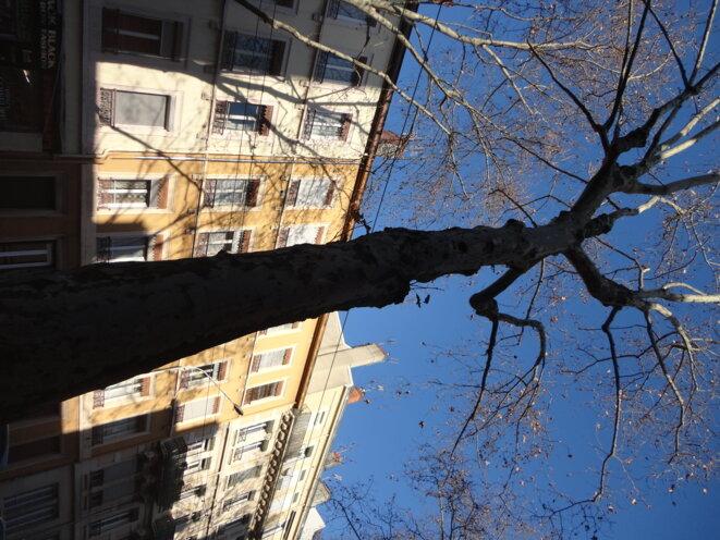 « Comme un arbre dans la ville » - Lyon janvier 2020 © Yves Robert