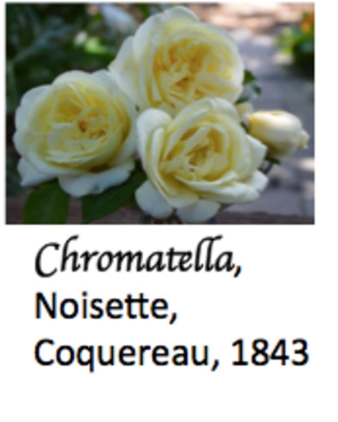 chromatella-avec-le-gende-1