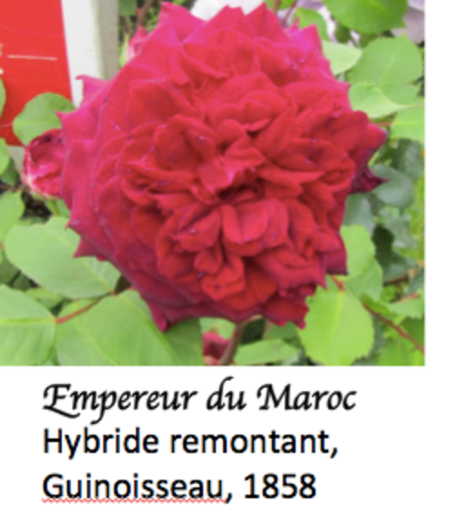 empereur-du-maroc-avec-le-gende