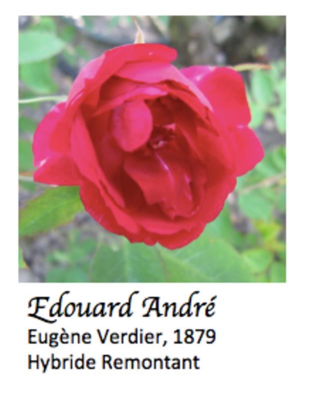 edouard-andre-verdier-1879