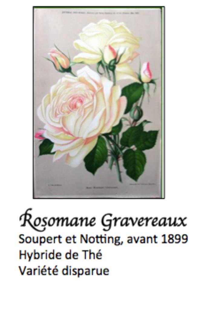 rosomane-gravereaux-soupert-et-notting