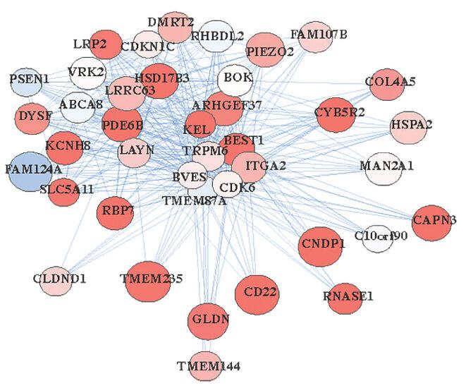 Groupement de gènes d'oligodendrocytes montrant un réseau de lignes bleues reliant les noms de gènes sur des bulles rougeâtres.