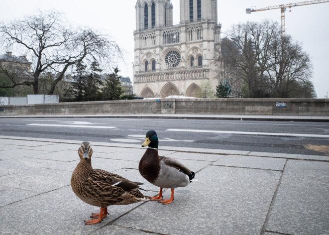 Devant Notre-Dame, à Paris, pendant le confinement, le 20 mars 2020. © Nicolas Portnoi / Hans Lucas via AFP
