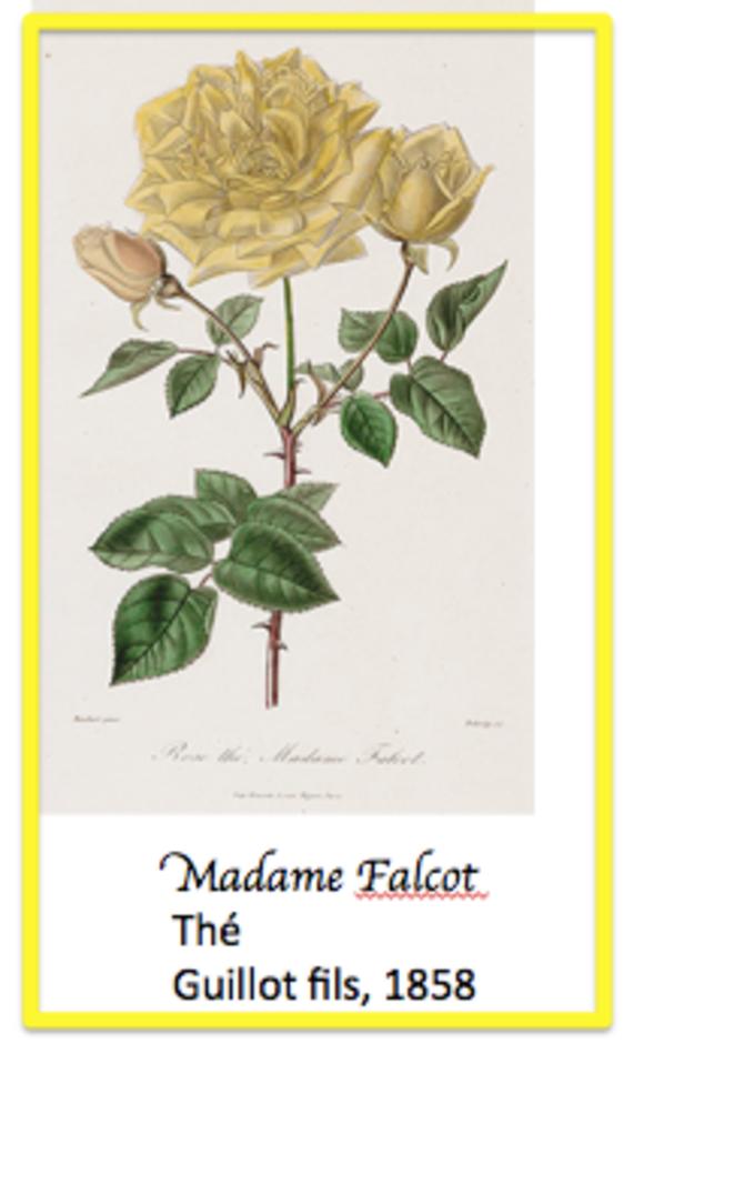 madame-falcot-pre-pare-e-pour-blog