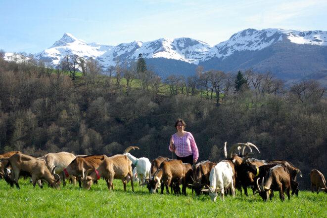 Au pâturage dans les Pyrénées © Y. Guillerault