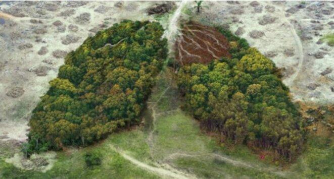 deforestations