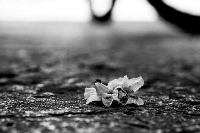 © Vanessa Cass