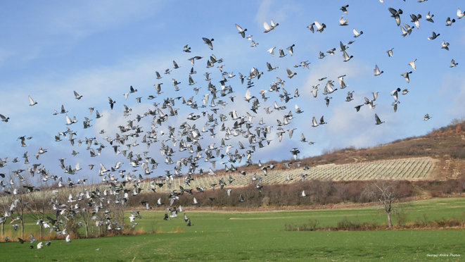 MIlle ailes pour un vol © Georges-André Photos