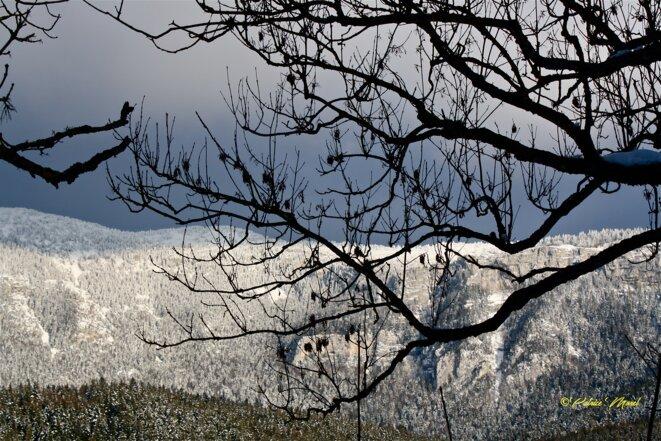 Vieilles branches © Patrice Morel (mars 2021)