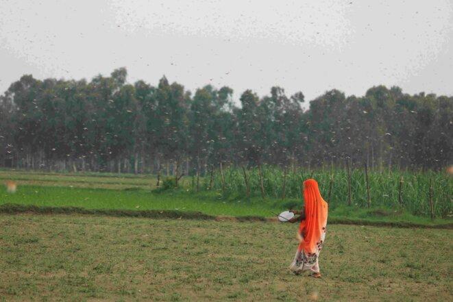 Agricultrices faisant fuir les criquets pèlerins en tapant sur un objet métallique. Photo : GAON Connection