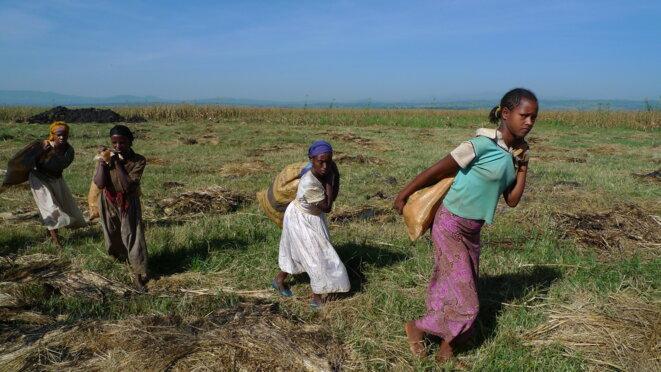 Récolte en Ethiopie © Planète à vendre
