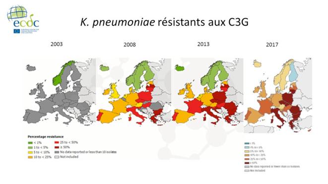 K. pneumoniae résistants aux C3G © Kit BLSE