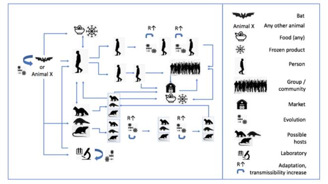 Émergence du SARS-CoV-2 : les scénarios étudiés par l'OMS. © OMS