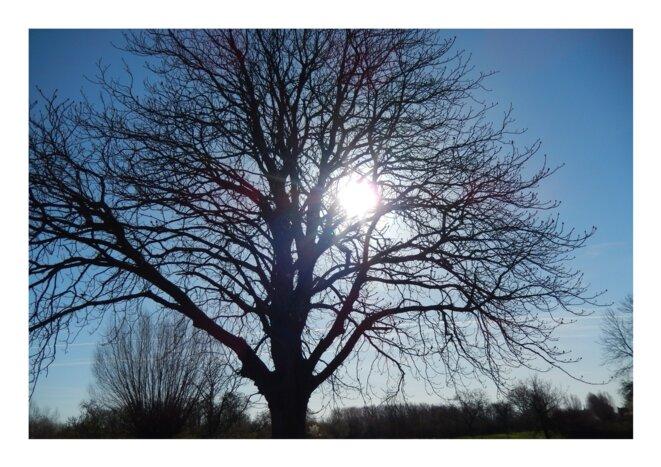 L'arbre majestueux © Edmey