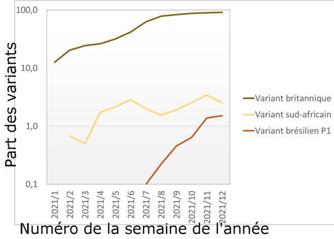 Variants P.1 et B.1351 aux Pays-Bas © Alan Emrey d'après les données du RIVM